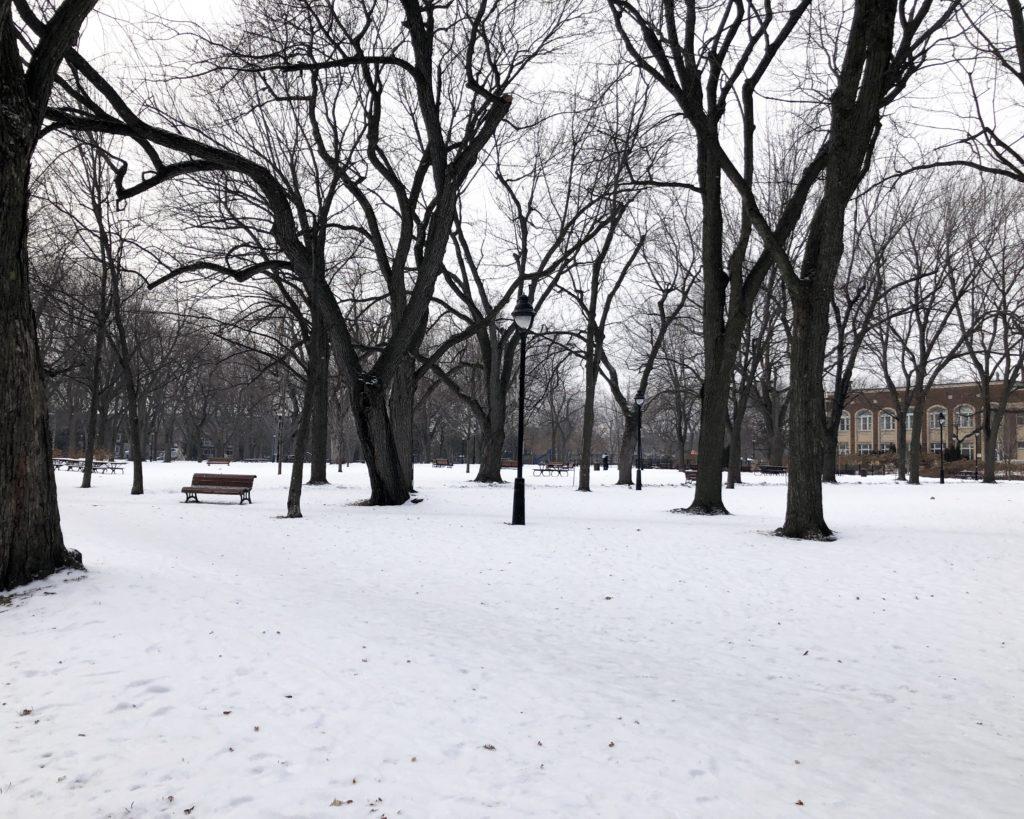 Parc enneigé à Montréal