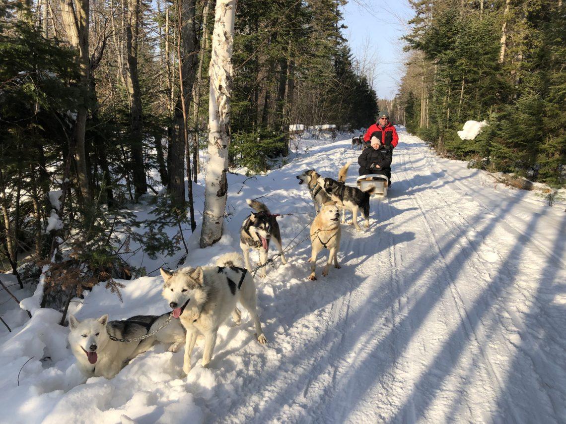 Balade en chiens de traîneaux - Auberge Le P'tit Bonheur à Québec