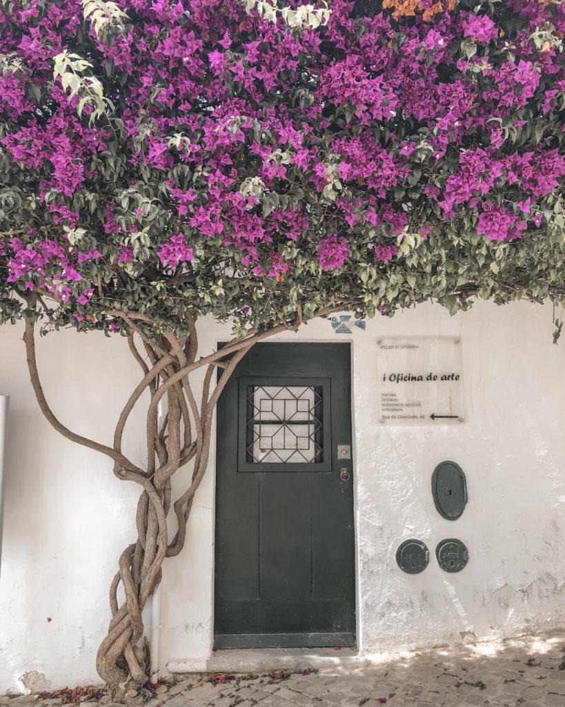 Visiter Tavira - City guide : fleurs